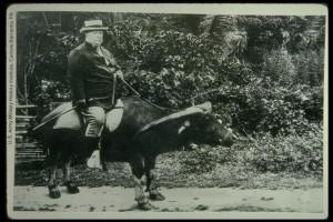 taftbuffalo